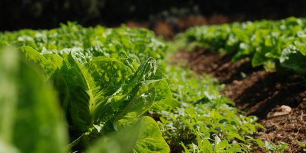 iot-agro-salternativa-metricas-climaticas-plagas