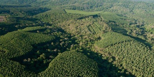 floresta-klabin-manejo-floretal-mosaico-klabin-divulgacao[1]